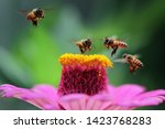 Honey Bees Fly Towards Red...