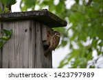 Birdhouse On Tree  House...