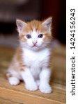 Stock photo orange kitten ginger kitten week old kitten blue eyes cat 1424156243