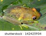 rough skinned green treefrog ... | Shutterstock . vector #142425934