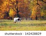 Autumn Landscape Cows Graze...
