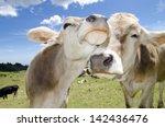 cows in love | Shutterstock . vector #142436476