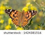 close up of painted lady...   Shutterstock . vector #1424381516