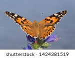 close up of painted lady...   Shutterstock . vector #1424381519