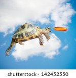 Stock photo turtle jumps and catches the frisbee 142452550