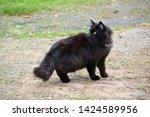 shaggy black cat looks around... | Shutterstock . vector #1424589956