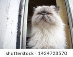 portrait of a shaggy cat with... | Shutterstock . vector #1424723570
