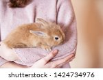 Stock photo girl holding a little red rabbit on a light background a red fluffy rabbit sits in the hands of a 1424734976
