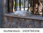Stock photo white cat lying on a wall in the town of sant elm mallorca spain 1424760146