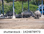 a family of rhino in the zoo  ...   Shutterstock . vector #1424878973