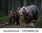 brown bear family in the forest    Shutterstock . vector #1424888126