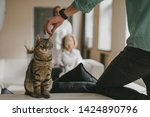 the man touches the cat behind...   Shutterstock . vector #1424890796