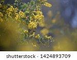 dreamy background yellow...   Shutterstock . vector #1424893709