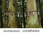 Stock photo shide on shimenawa around a yorishiro tree at kawaguchi asama shinto shrine fujikawaguchiko japan 1424896403