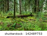 Rain Forest In Olympic National ...