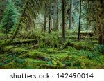 Deep Forest In Olympic Nationa...