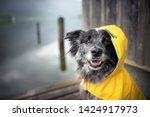 Dog With Rain Coat At The Lake...