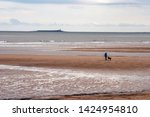 Stock photo alnmouth beach northumberland england may alnmouth beach with a dog walker with coquet 1424954810