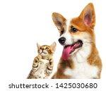 Stock photo cute puppy and kitten looking sideways 1425030680