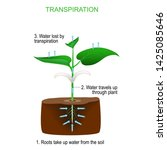 transpiration is the process of ... | Shutterstock .eps vector #1425085646