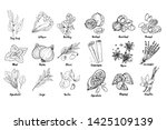 herbs. spices. italian herb... | Shutterstock .eps vector #1425109139