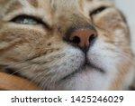 Cat Animal Fur Mammal Pets