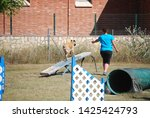 dog and trainer  see saw ...   Shutterstock . vector #1425424793