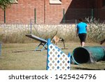 dog and trainer  see saw ...   Shutterstock . vector #1425424796