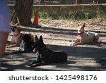 canine portrait  dog obedience...   Shutterstock . vector #1425498176
