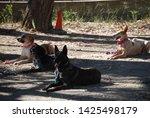 canine portrait  dog obedience...   Shutterstock . vector #1425498179