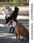 canine portrait  dog obedience...   Shutterstock . vector #1425498206