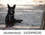 canine portrait  dog obedience...   Shutterstock . vector #1425498230
