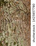 rough tree bark texture... | Shutterstock . vector #1425857780