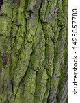 rough tree bark texture... | Shutterstock . vector #1425857783
