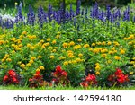 Colorful Blooming  Flower Garden