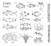 type of edible fishes  hand... | Shutterstock .eps vector #1426075103