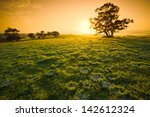 Fresh Meadow Sunrise In The...