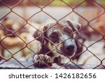 close up a stray dog  alone... | Shutterstock . vector #1426182656