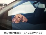 Dog left alone in locked car....