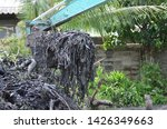 dirty work dig tree use backhoe ... | Shutterstock . vector #1426349663