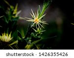 nature flower and plants with... | Shutterstock . vector #1426355426