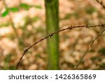 rusty barbed wire fence ... | Shutterstock . vector #1426365869