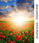 red poppy field in the sunset | Shutterstock . vector #142641448