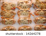 Crabs on ice - stock photo