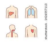 healthy human organs color... | Shutterstock .eps vector #1426557113