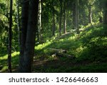 summer sunny forest with... | Shutterstock . vector #1426646663