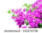 Image Of Bright Bougainvillea...