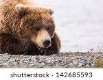 Sleeping Brown Bear