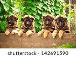 Group Of Four German Shepherd...