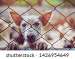 close up a stray dog  alone... | Shutterstock . vector #1426954649
